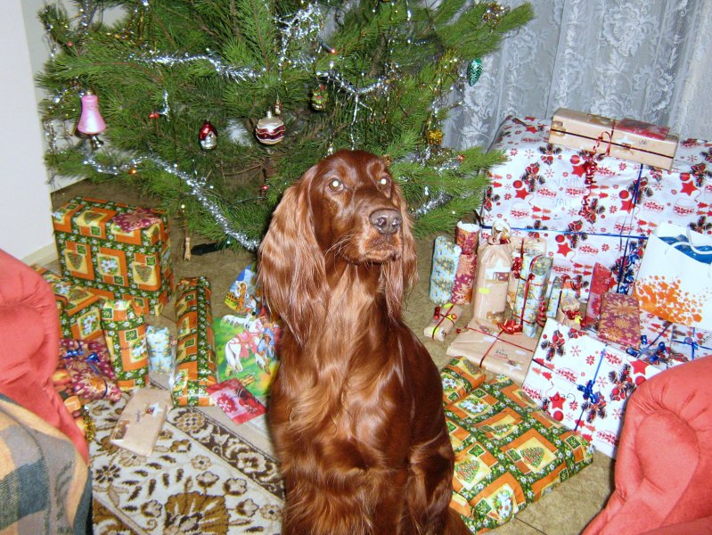 Krásné vánoce 2009
